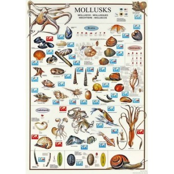 POSTER MOLUSCOS